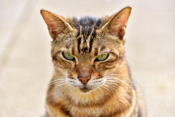 怒る野良猫