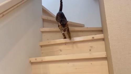 階段から降りる猫