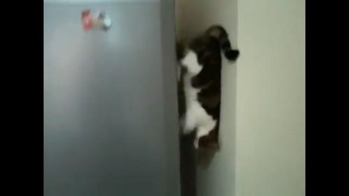 冷蔵庫の側面を歩く猫