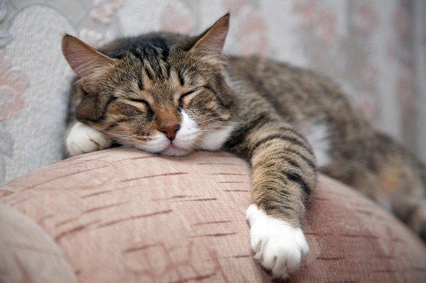 ソファにしがみついて寝る猫