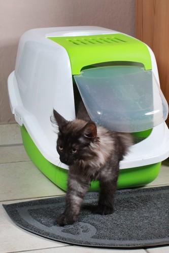 部屋に置かれたトイレから出てきた猫