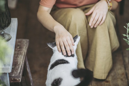 しゃがんで猫を撫でる飼い主