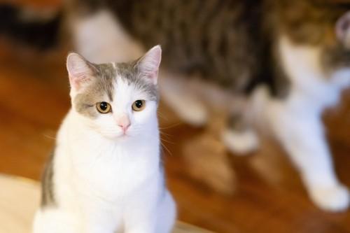座ってこちらを見つめるしつこい猫