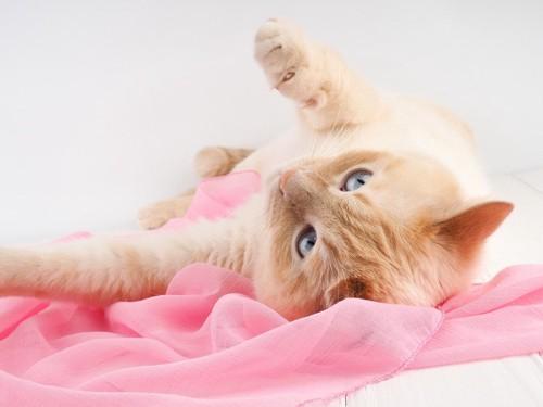 ピンクの布の上で寝転ぶ猫
