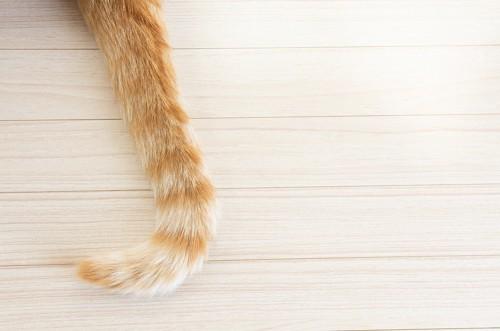縞模様の猫のしっぽ