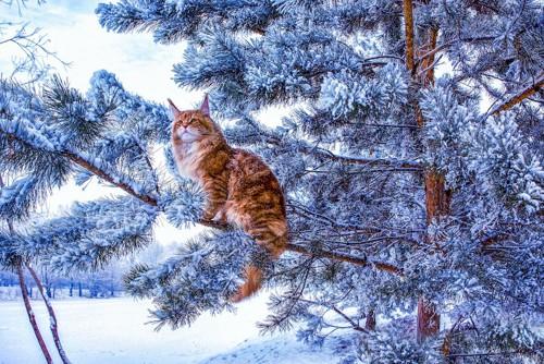 雪の積もった木に座る猫