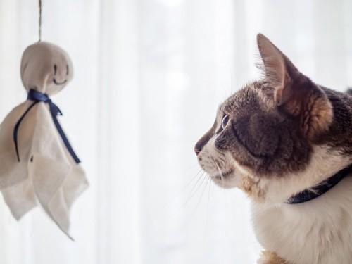 てるてる坊主と猫