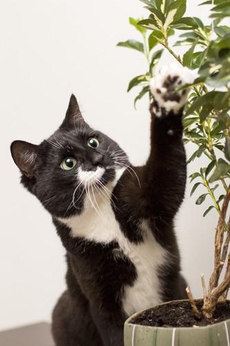 観葉植物に手を出す猫
