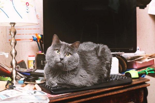 206352242 キーボードの上に座る猫