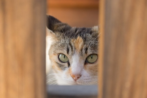 覗いている猫