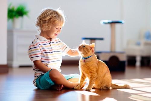 子供に話しかける猫