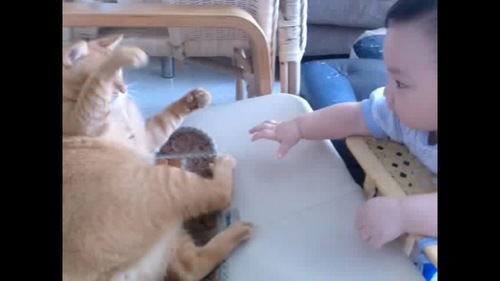 猫ちゃんと赤ちゃん