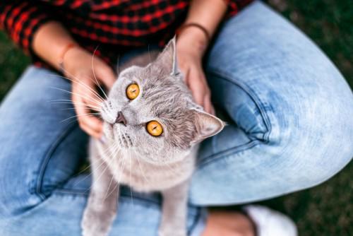 飼い主を見あげる猫
