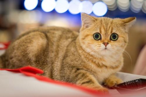 驚いて固まる猫