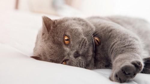 気分の悪い猫