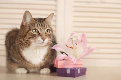ユリの花と猫