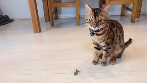 葉っぱの横に座る猫