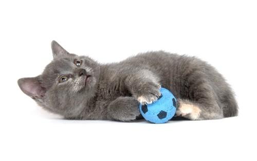 ボールと猫