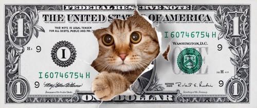 ドル札の中央から飛び出る猫
