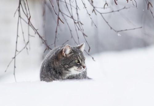 周りを見る猫
