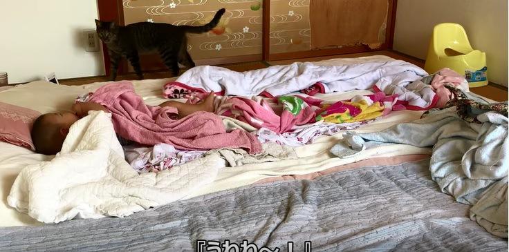 赤ちゃんと赤ちゃんを見る猫