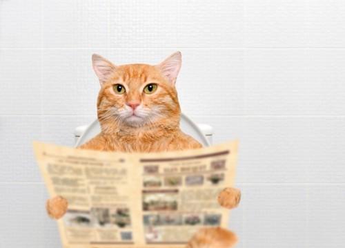 新聞を読みながら便器に座る猫