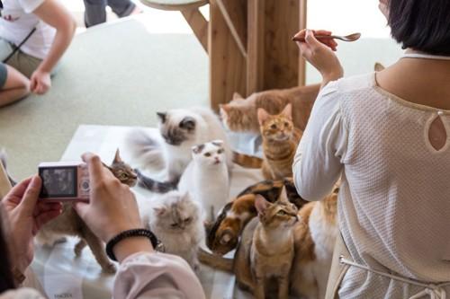 猫カフェで猫達と遊ぶ人