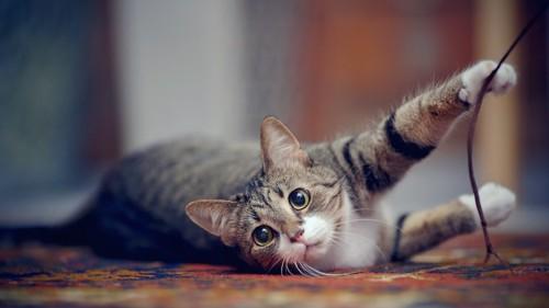 寝転んで紐にじゃれる猫