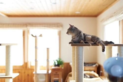 タワーの上で寛ぐ猫