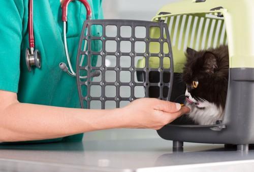 病院に来たケージ内の猫