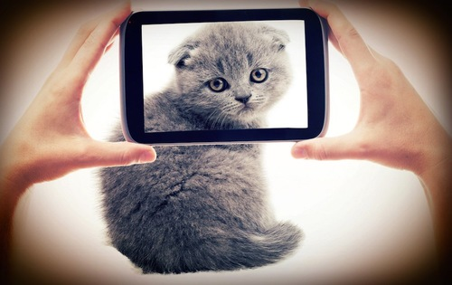 カメラで子猫を撮る人