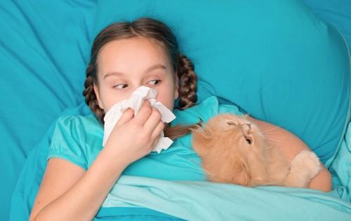 鼻をかむ少女と一緒に寝る猫