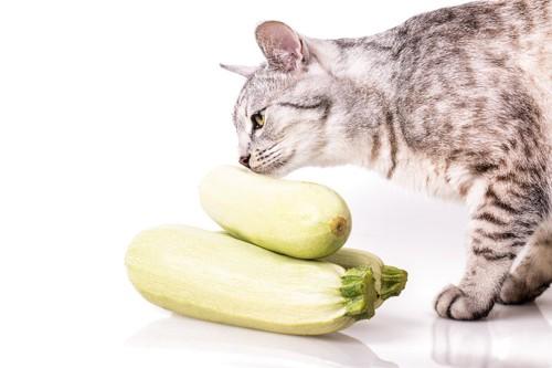 ズッキーニの匂いを嗅ぐ猫