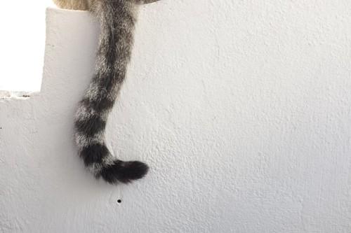 垂れ下がった猫の尻尾