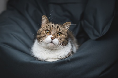 クッションの上に座ってくつろぐ猫