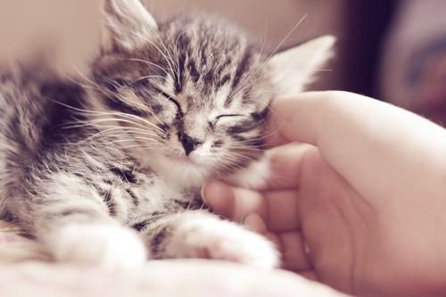 飼い主に撫でられて嬉しそうに眠る猫