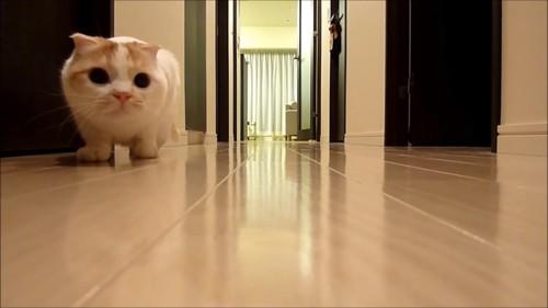 姿勢を低くして左側にいる猫
