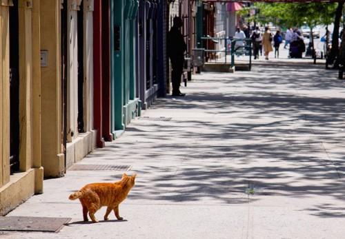 ニューヨークの道を歩く猫の後ろ姿
