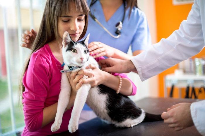 動物病院にいる猫と少女
