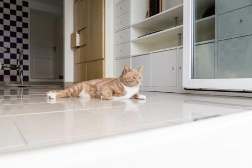 綺麗な部屋でくつろぐ猫
