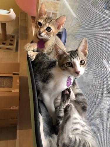 窓際の猫(3匹)