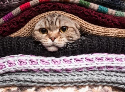 大量の服に埋もれる猫