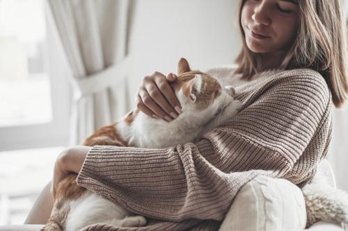 女性に寄りかかる猫