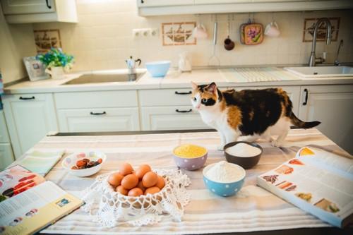 料理素材の乗ったキッチンにいる三毛猫
