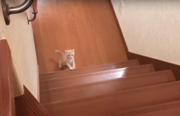 階段を上り始めた子猫