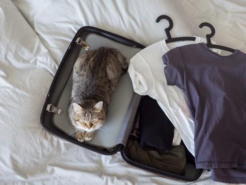 旅行カバンの上でくつろぐ猫