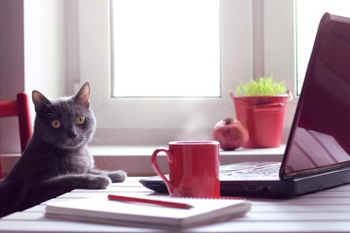 テーブルの上のパソコンの前でこちらを見る猫