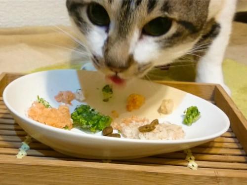 食べている猫