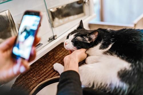 スマートフォンを持って猫を撫でる人の手