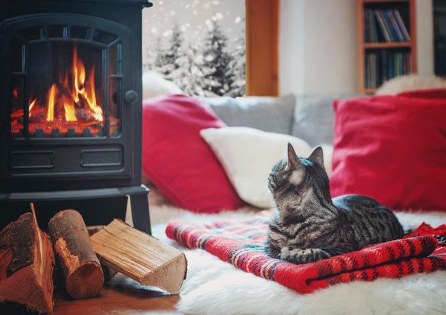 暖炉の前で寛ぐ猫